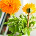 Buntstifte zum Einpflanzen